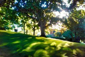 Twighlight on Alexandra Park