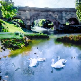 Avoncliff Swans